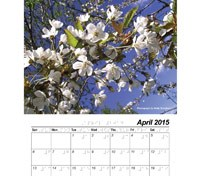 Picture for category Braille Calendars